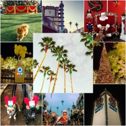 California Christmas Shopping at The Grove in Los Angeles