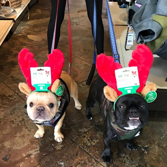 dog-holiday-shopping-christmas-reindeer-antlers-by-hankmoodythefrenchie-11-30-2016-1