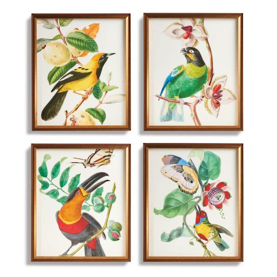 tropical-art-collection-from-the-new-york-botanical-garden-archives-giclee-prints-12-27-2016-5