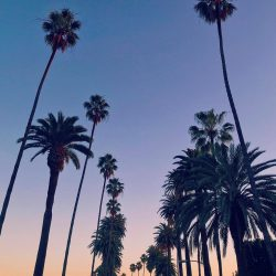 Sunset & Palm Trees in Beverly Hills