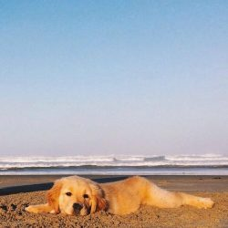 Puppy and Waves