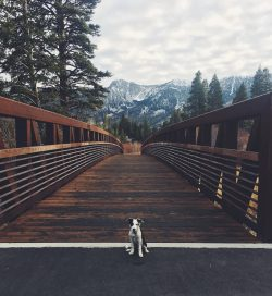Puppy at Mammoth Lakes, California